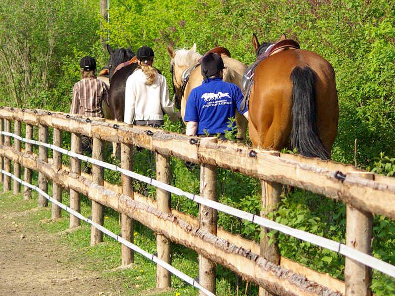 Jezdecký výcvik na koni