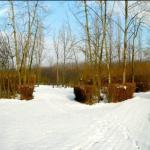 Zadní část jezdeckého parku v zimě.